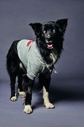 Unisex Habillement pour chien Taille Chihuahua-Yorkshire[Cou 22 cm] 100% Coton - Dsquared2 - Modalova